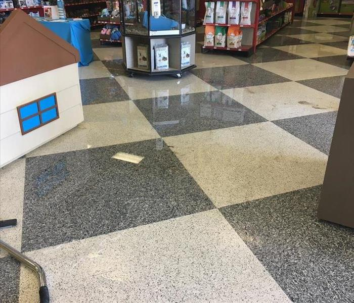 Water in a Pet Store Before