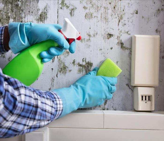 Why SERVPRO Silverdale DIY'Selfers Should Call SERVPRO for Mold Remediation