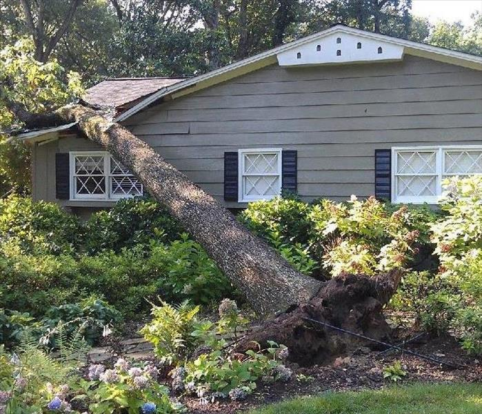 Storm Damage Falling Trees from Severe Wind & Rain Storms